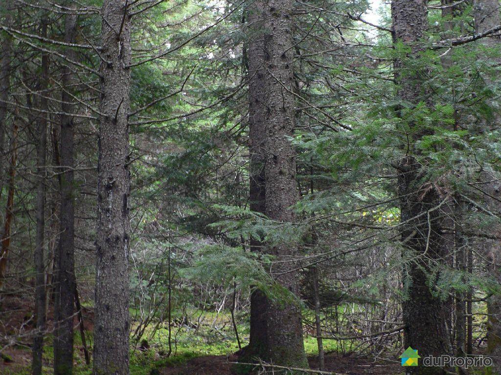 terre 224 bois vendu st magloire de bellechasse immobilier qu 233 bec duproprio 465494