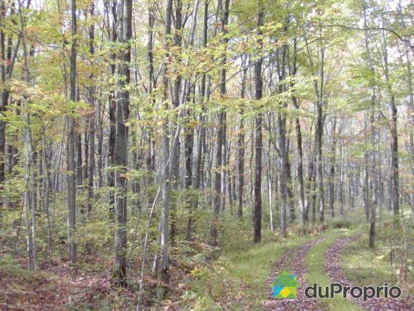 Bois Cerisier A Vendre : boise-terre-a-bois-a-vendre-ste-gertrude-quebec-province-large-297765