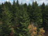 Terre � bois � Paspebiac, Gasp�sie-�les-de-la-Madeleine