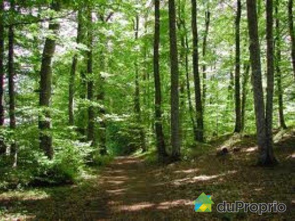 terre 224 bois vendu st lucien immobilier qu 233 bec duproprio 237201