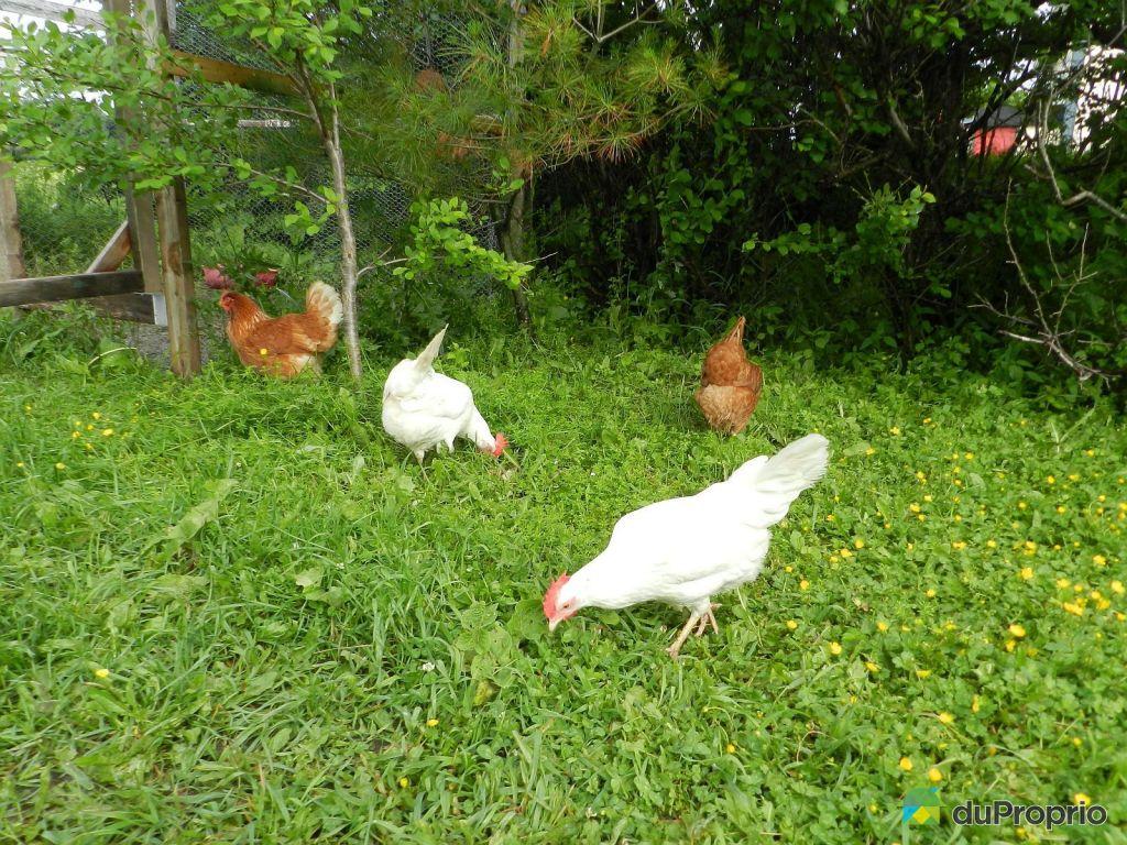 Maison vendre st fabien 182 1re rue immobilier qu bec duproprio 566903 - Maison jardin a vendre aylmer colombes ...