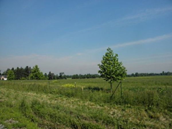 residential lot sold in ancaster comfree 386832