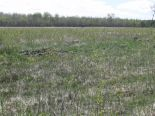 Residential Lot in Roseau River, East Manitoba - South of #1