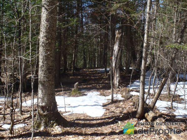 Woods - chemin Doré, La Minerve for sale