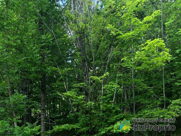 Tree -  chemin de l'Ermite, Mont-Tremblant for sale