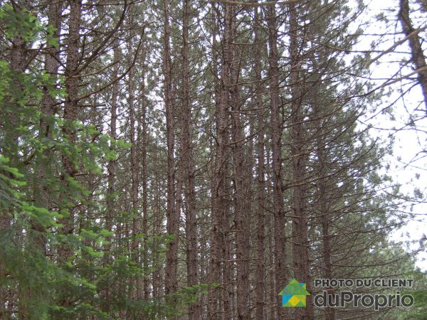 Woods - 1275-V 5e Rang Est, St-Nérée for sale