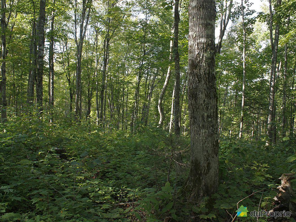 terre 224 bois 224 vendre st adalbert route 204 ouest immobilier qu 233 bec duproprio 284878