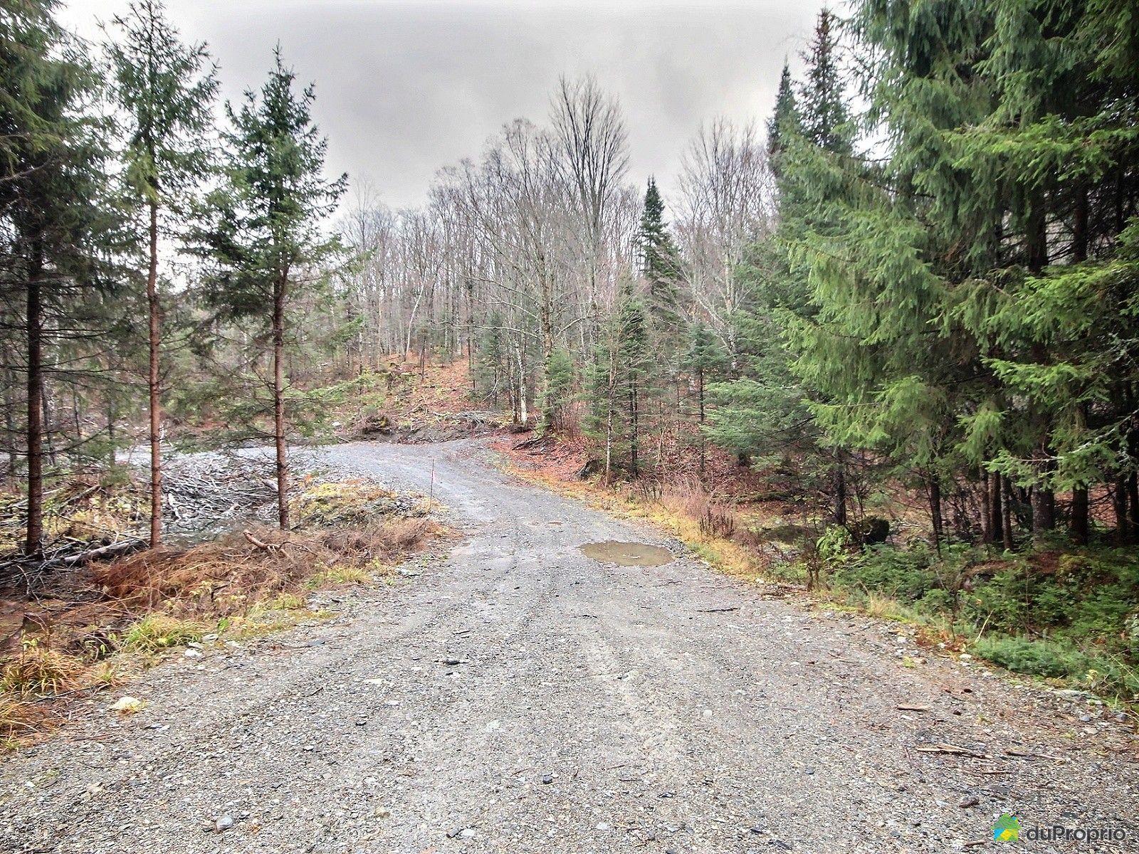 Terreà bois vendu St Magloire De Bellechasse, immobilier Québec DuProprio 667255 # Bois De Chasse A Vendre