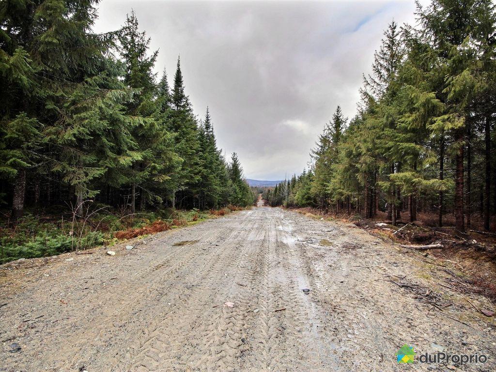 Terre bois vendre st magloire de bellechasse 19 rang for Terrain nord