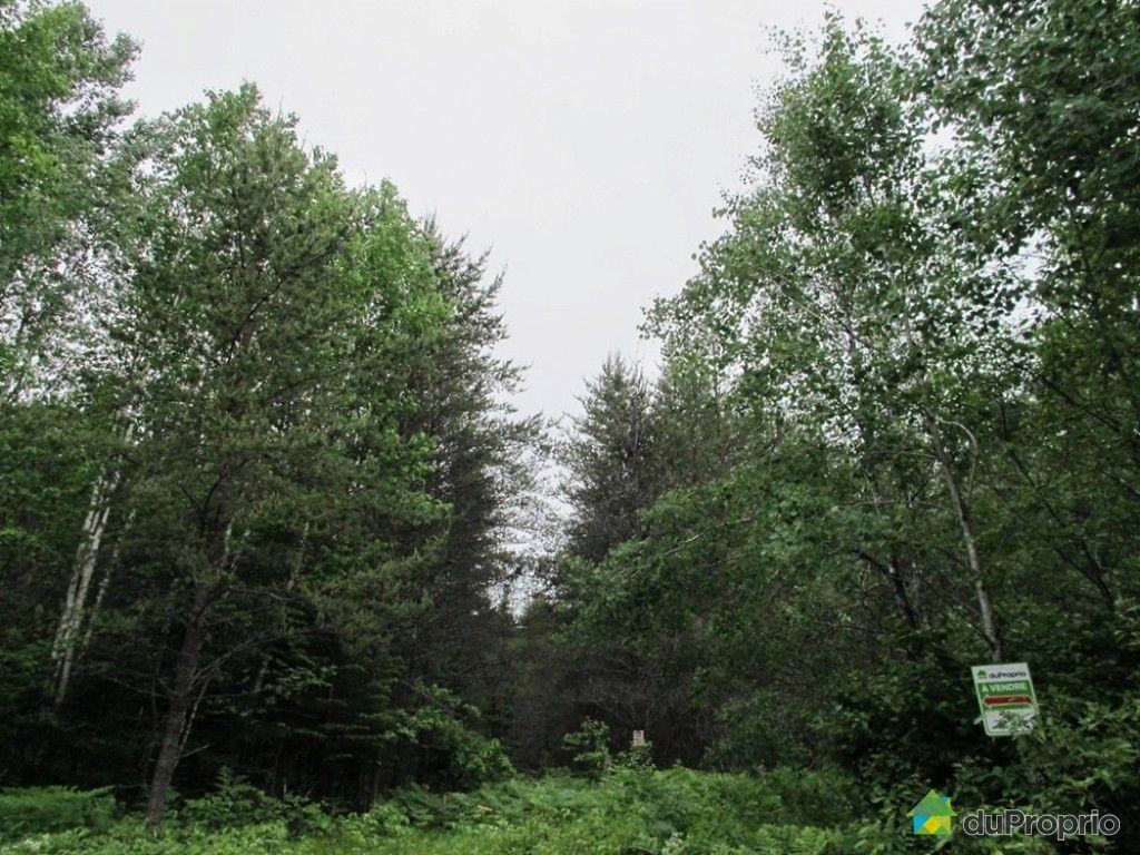 terre bois vendre kazabazua du ruisseau des cerises immobilier qu bec duproprio 487495. Black Bedroom Furniture Sets. Home Design Ideas